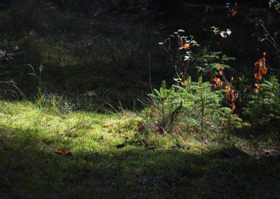 Schweissprøve Sjørup 09.09.18_0359